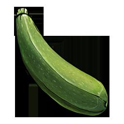 Fruit, zucchini, vegetable icon